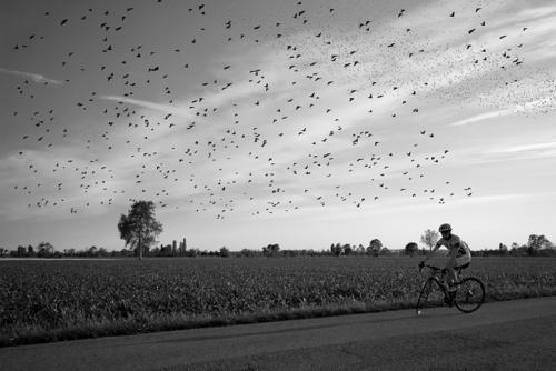 03---Uccelli-grey